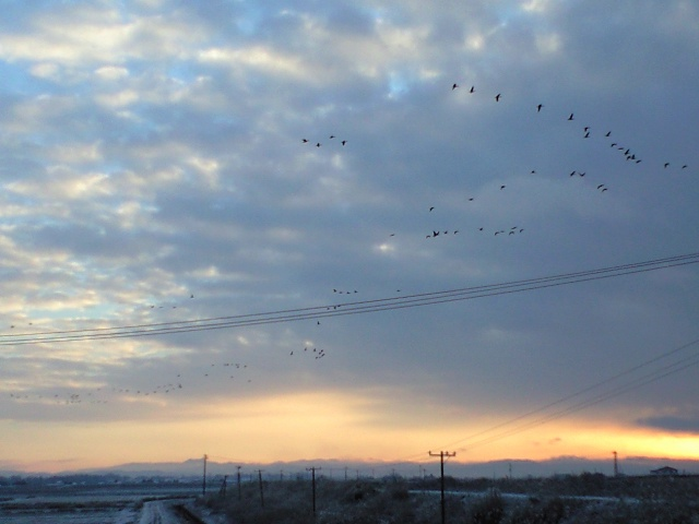 雁の飛び立ち