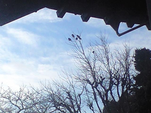 木に実る雀