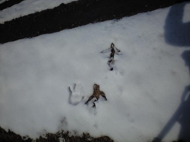 丹頂鶴の足跡でかし