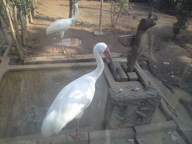 動物園その一