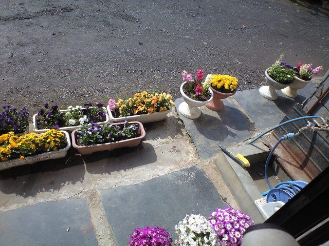 玄関脇の花
