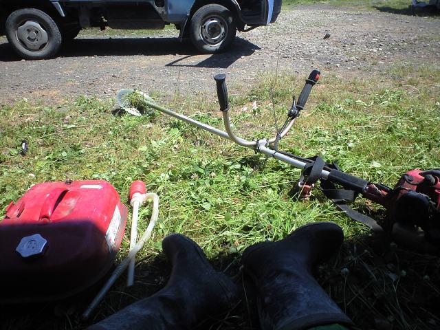 草刈りと木陰