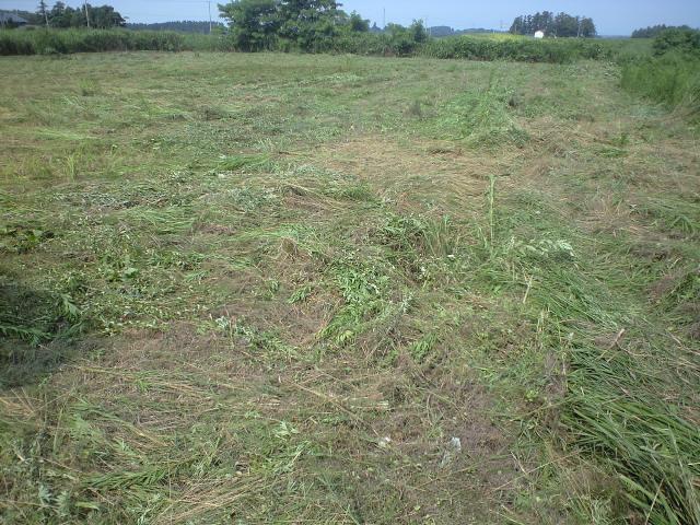 減反草刈り