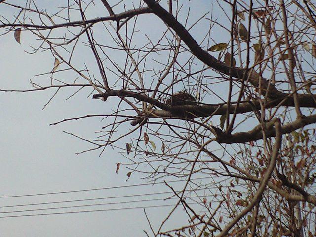 落ち葉に巣