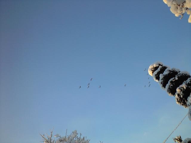 雪の合間に雁