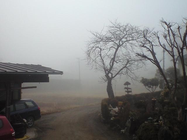 久しぶりの霧