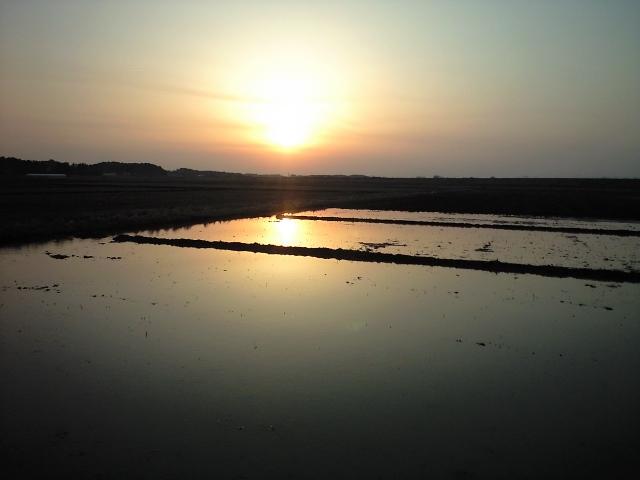 苗代と夕日