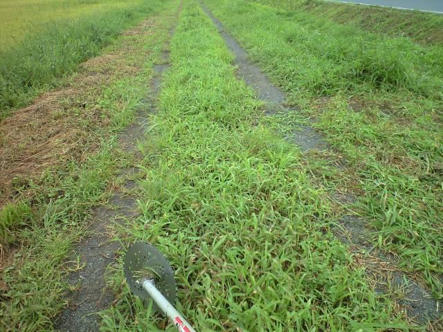 草刈り開始