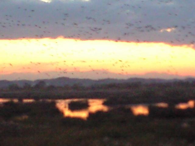 蕪栗沼の夕陽