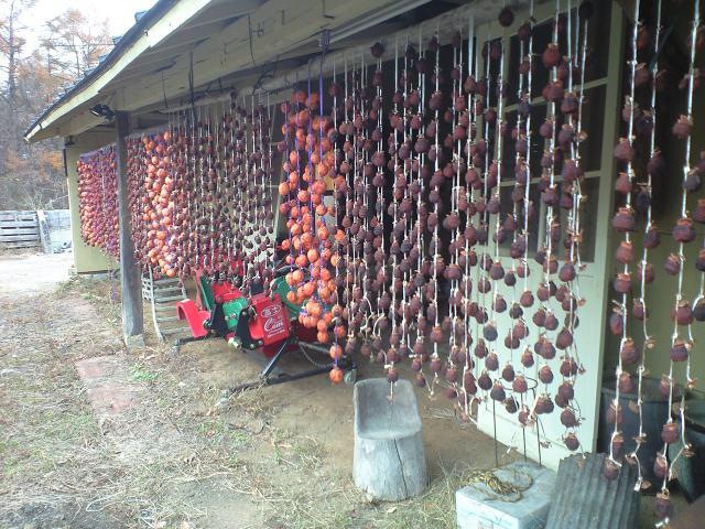 干し柿のカーテン