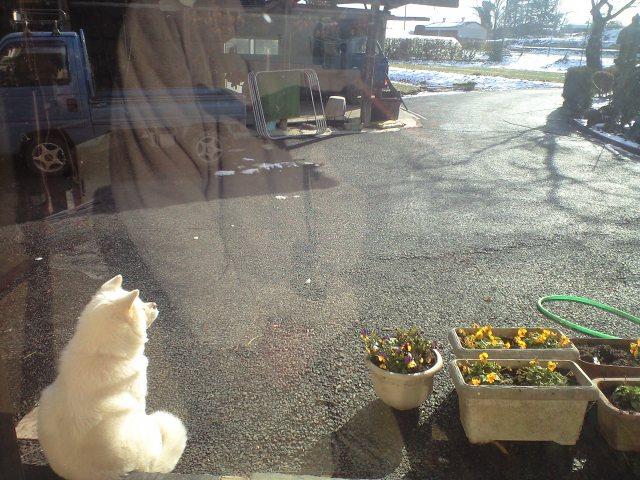 雪景色見る犬