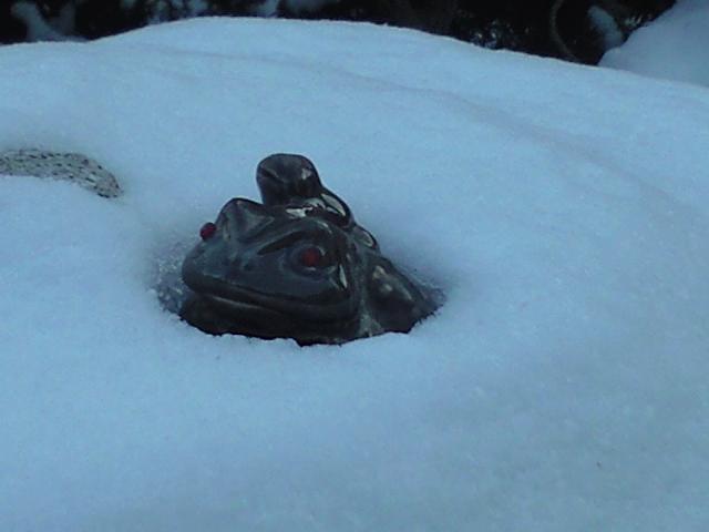雪に埋もれるカエル