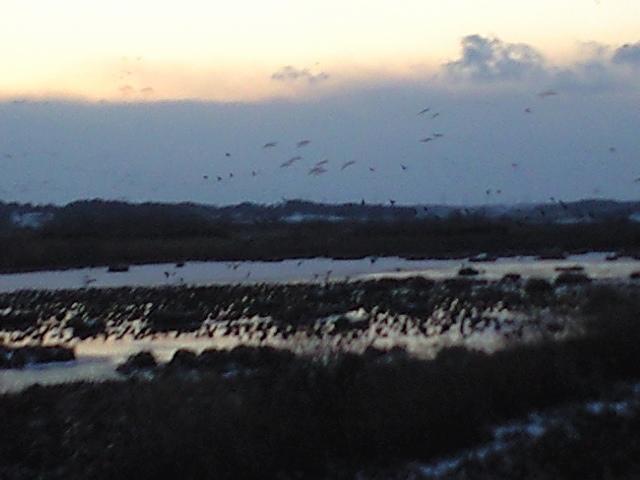 蕪栗沼の朝の飛び立ち