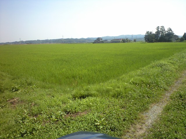 草刈り再開