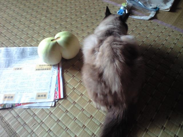猫とふたごメロン