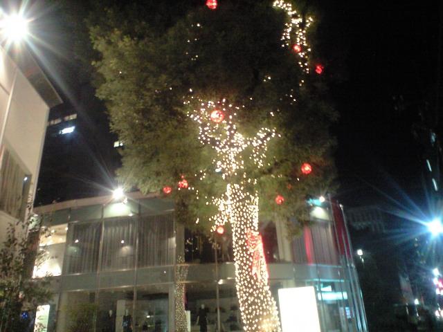 宿の向かえの木