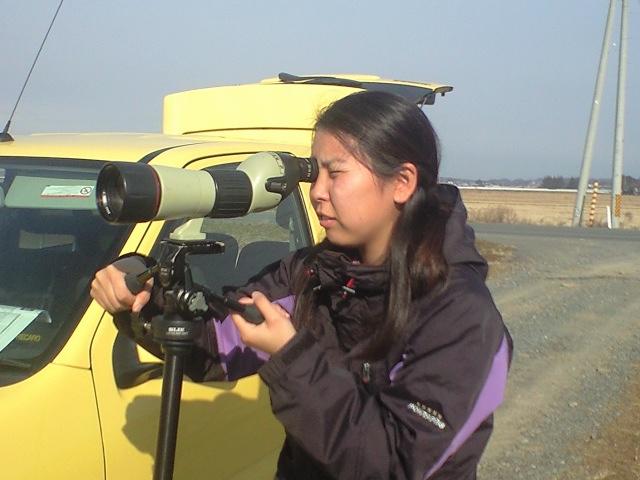 1月雁類広域調査