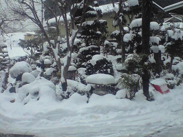 雪に覆われ
