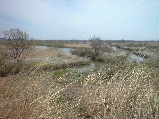 春の蕪栗沼