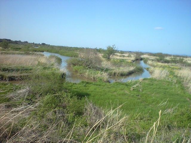 初夏の蕪栗沼