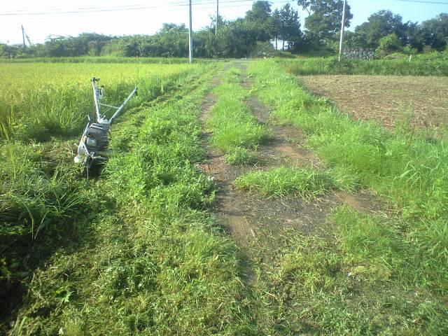 棚田草刈り