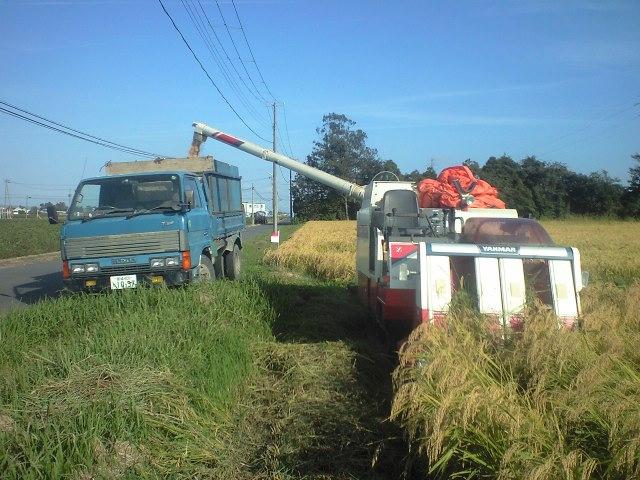 稲刈り始まる。