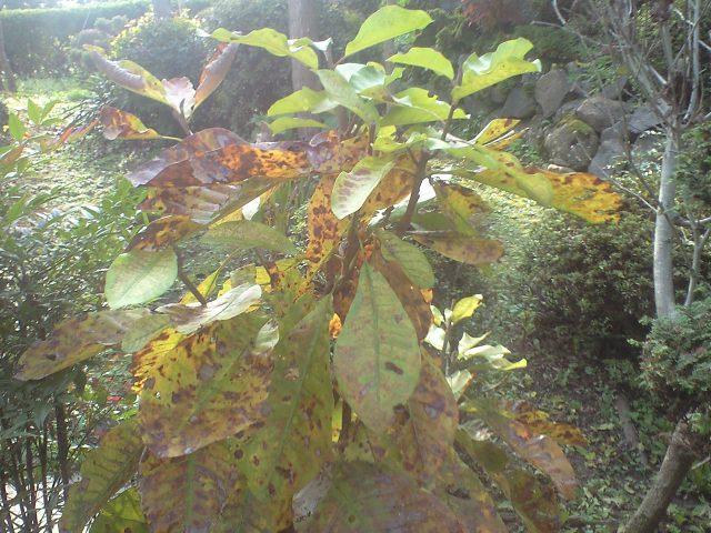 庭のほうの木