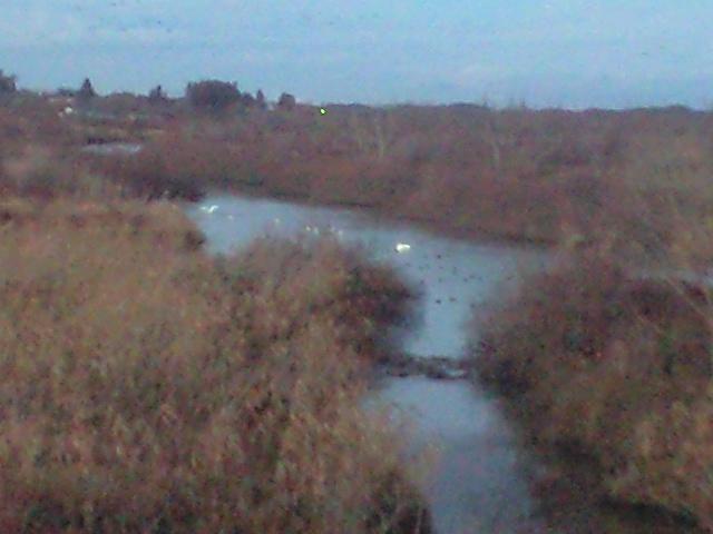 冬の蕪栗沼