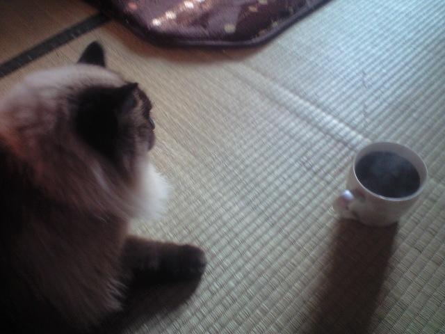 朝はコーヒーと猫、そして新聞、携帯。新聞に目を通しブログ、フェイスブックつけ優先づけに仕事します。