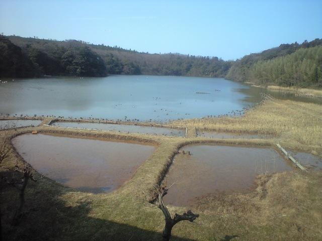 加賀市片野鴨池