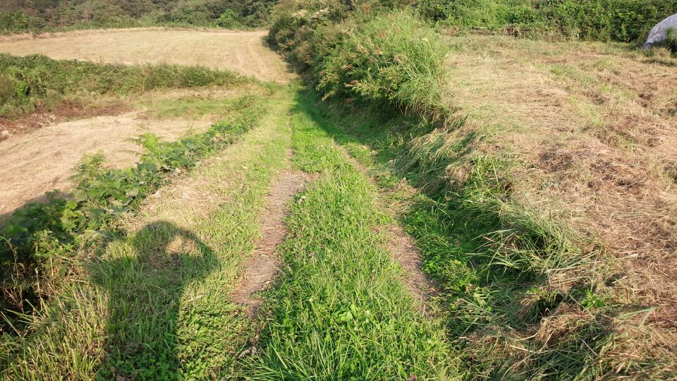 牧草地、畦刈り