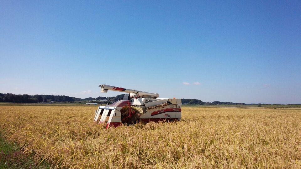 稲刈り追い込み
